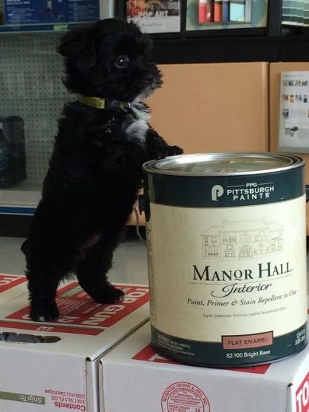 Winston loves the Manor Hall product. Just remember to order at least a week in advance so we have time to create a formula!